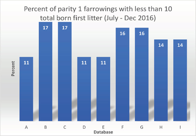 percent of parity 1 farrowings with less than 10 total born first litter (July-Dec 2016)
