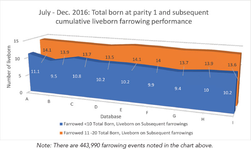 July-dec 2016 total born at parity 1 and subsequent cumulative liveborn farrowing performance